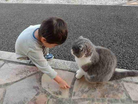 """【衝撃画像】保育園まで迎えに来てほしくて""""道を教える息子""""と""""真剣に聞く猫""""が「どっちもかわいい」"""