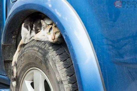 ガチでヤバい「猫バンバン」が話題に・・・