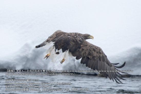【画像】すまん、この鳥の名前を教えてくれwwww