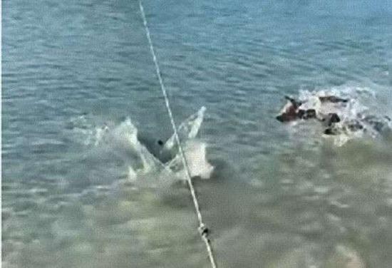 飼い主が危ない!海に飛び込み近づいてきたサメを必死に追い払おうとする勇敢な犬がこちらwwwww