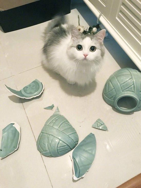 ネッコ「おい!花瓶が割れてるぞ!誰がやったんやろなぁ」