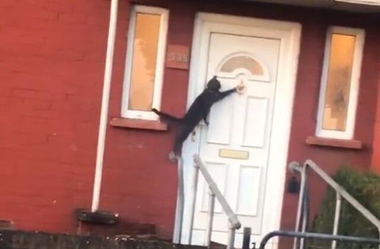 ドアをノックする猫が発見されるwww