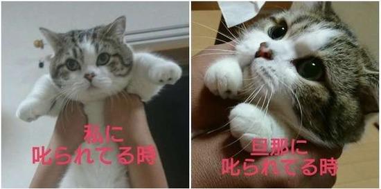 猫がなぜニャーと鳴くか解説した結果www