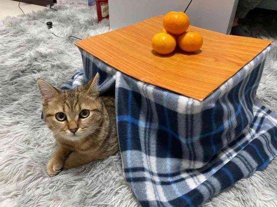 【画像】子猫専用のこたつを作ってみたら控えめに言ってヤバすぎる光景が誕生wwwww