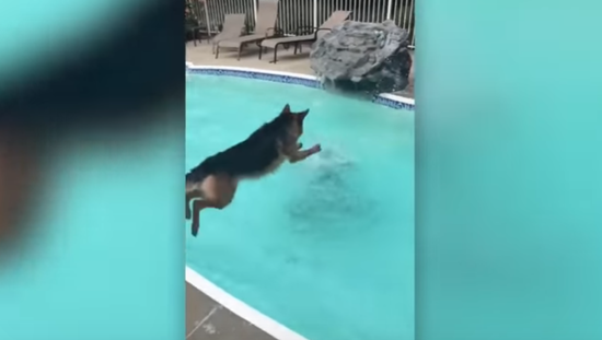 【動画】溺れているご主人を助けるため、危険を顧みずプールに飛び込んだワンコの行動に胸が熱くなるwwwwwww