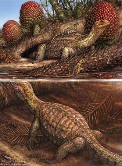【画像】2.4億年前のカメに骨肉腫、現代人のがんに酷似!「信じられないほど珍しい」発見wwwwww