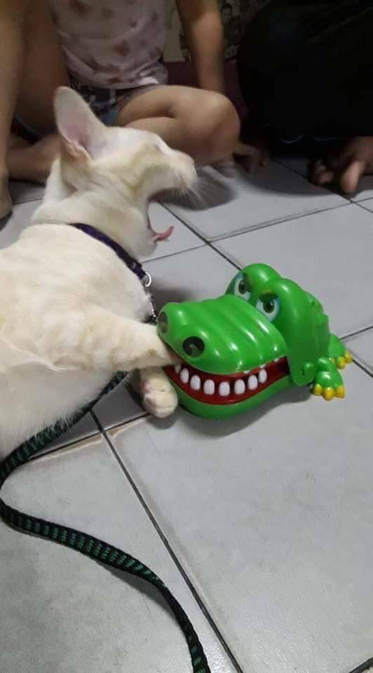 【画像】画  像  で  笑  っ  た  ら  寝  ろwwwwwwwwww