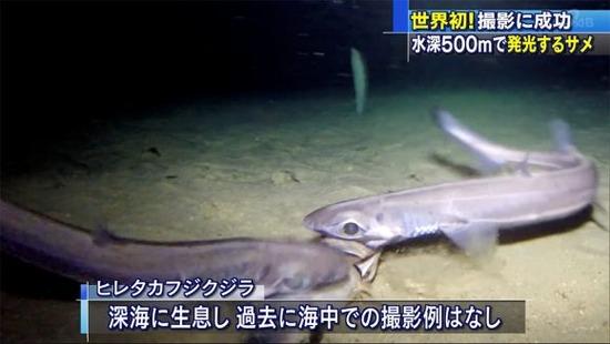 【画像】世界初!お腹が光る深海ザメの撮影に成功wwwwwwww