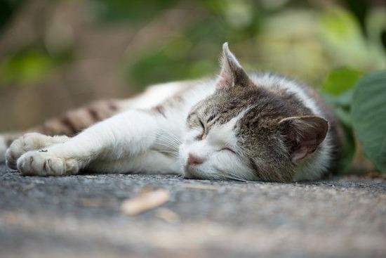 表現に困ったら「猫みたいな」と言え!?人生に役立つ「短所を長所に変える辞典」が話題に・・・