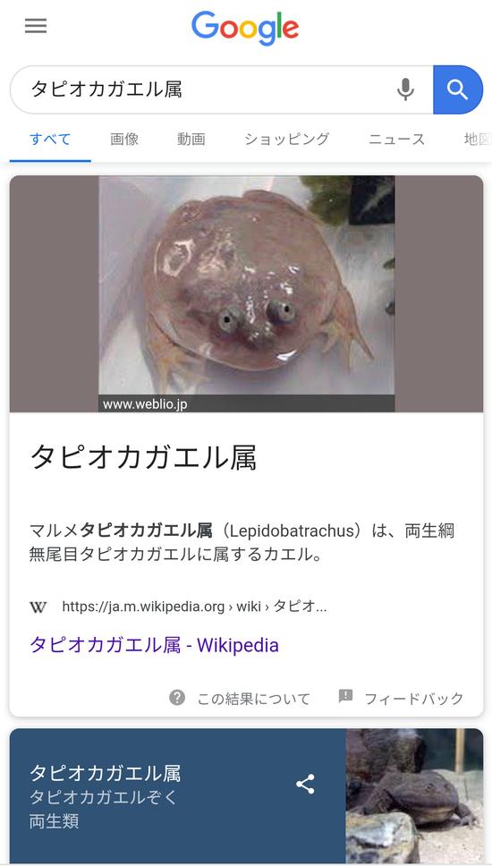 【画像】卵をミルクティーに入れた物がブーム乱獲続くタピオカガエル!?暴力団の資金源に「こんな楽な商売ない」←コレwwwww