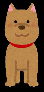 【画像】「柴犬」と「ハスキー」をミックスさせた「結果」wwwww