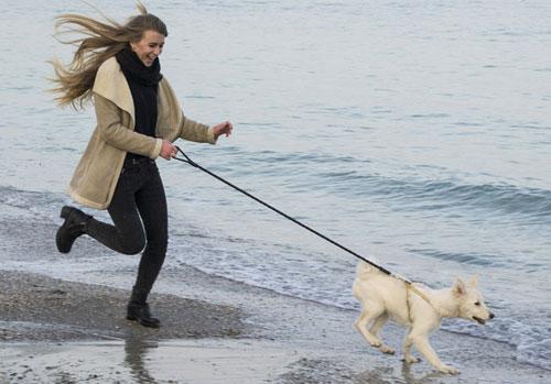 dog-run