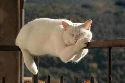 我が家の猫が起きないので布団をかけてみた結果・・・※画像あり