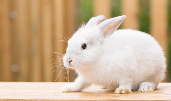 車のクラクションで目を覚ましてしまったウサギさんが可愛い・・・※画像あり