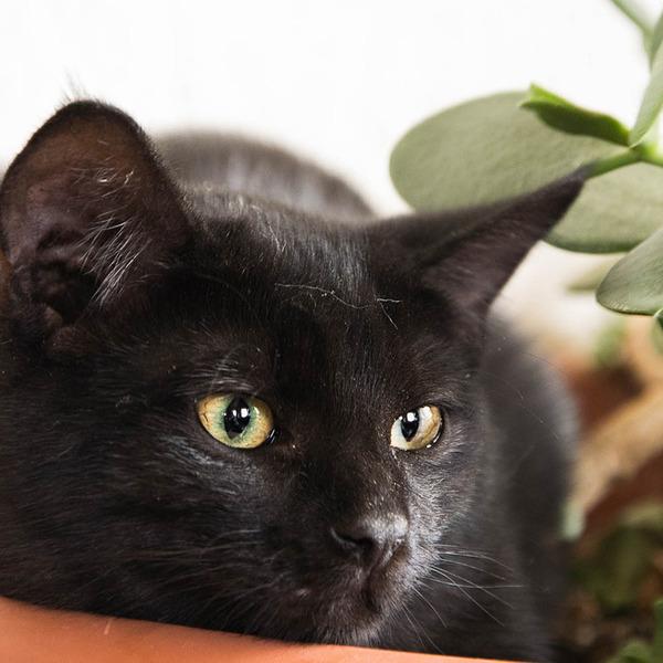 cat-1723951_1280