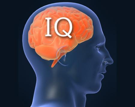 IQ 本文