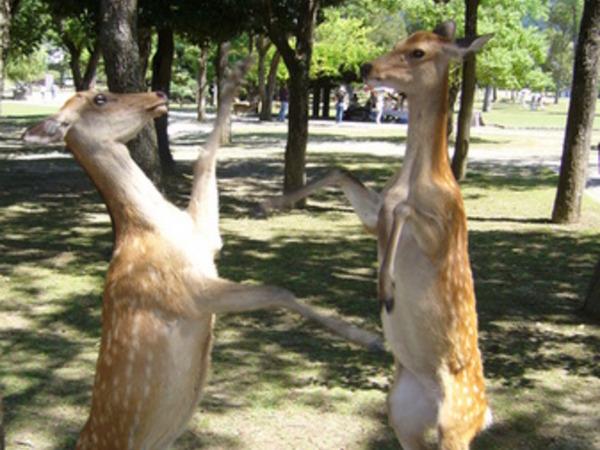 【朗報】外国人が奈良公園に観光する理由、解明される(画像あり)