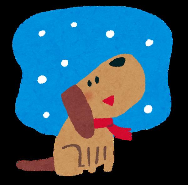 snow_dog