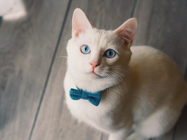 猫さん、主人が外出で暖房消えてたせいでおしくらまんじゅう状態にwwwww※画像あり