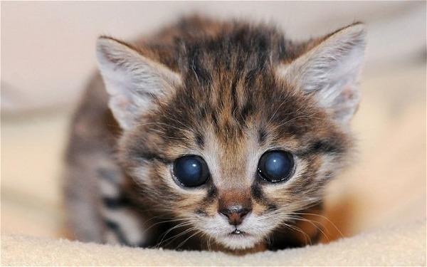 kitten_2182000b