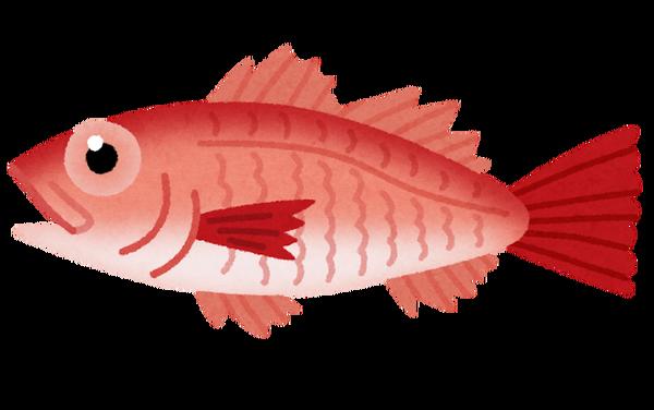 fish_nodoguro