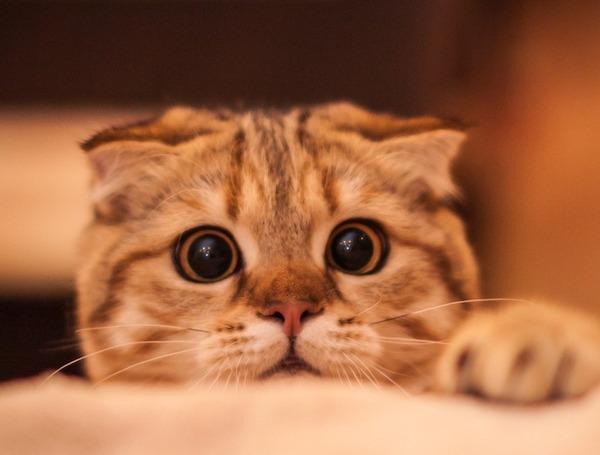猫さん落ちてたんだけどwwwww※画像あり