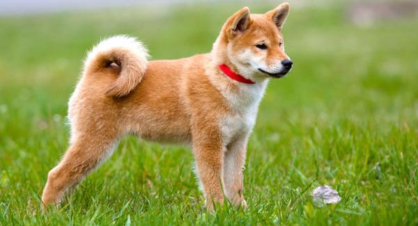 犬さん、飼い主の言葉を完全無視してしまう・・・
