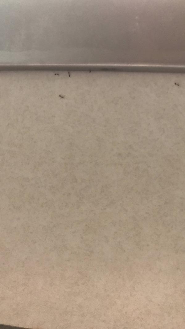 【悲報】ワイの部屋、アリに侵食される(画像あり)