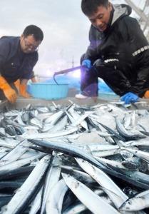 【北海道新聞】サンマ水揚げ8割減 日本漁船が公海で見つけた狭い漁場に台湾や中国、韓国の船が集中し、不漁の中で争奪戦