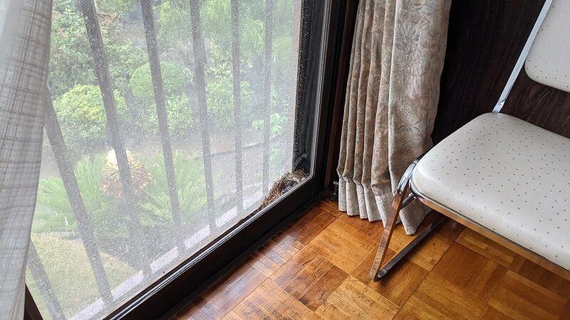 窓と網戸の間に鳥の巣が!