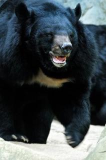 秋田市でクマに襲われ男性けが 畑作業中 県は注意呼び掛け