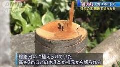 """中央線""""撮り鉄スポット""""住宅の木、無断で切られる 八王子"""