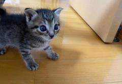 来客時の子猫さんの隠れ方が、何度見ても可愛すぎると話題 「隠れているつもり?」「内弁慶日本代表!」