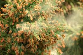 【健康】スギ花粉 肌にもダメージ 水分蒸発させ、油分分泌を抑制[毎日新聞]