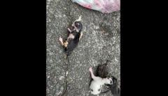 子ネコ4匹を生きたままゴミに... 27歳男を逮捕 長崎