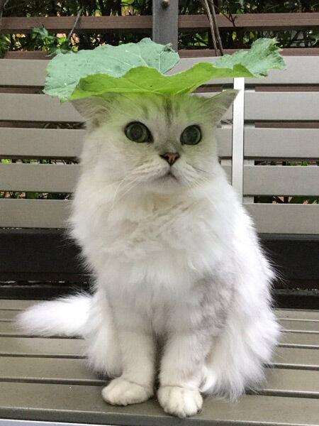 別のフキの葉を載せポーズをとるロビーくん(こげめさん提供)