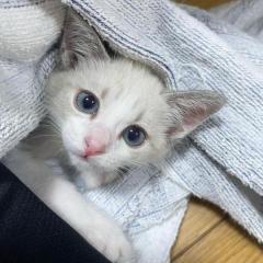 出会いは七夕の翌日 大雨の中で助けを求めていたね 愛猫は天からの贈り物
