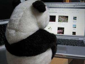 ネットするパンダ