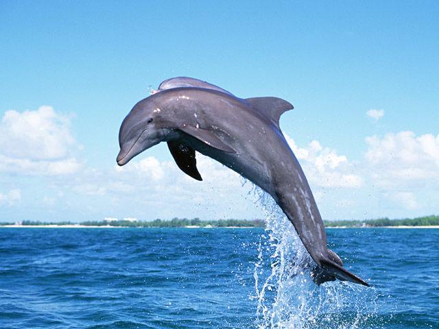 dolphin-jump