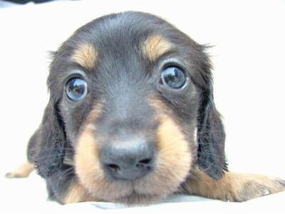 川口春奈がペットショップで犬を購入し批判殺到。ひろゆき「ペットショップを利用する奴は人間のクズ」
