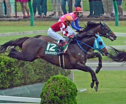 【競馬】オジュウチョウサンの有馬記念の単勝オッズガチ予想wwwwww