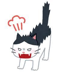 SHELLY、田中みな実に噛みつく「本当に大っ嫌いなんです!!」