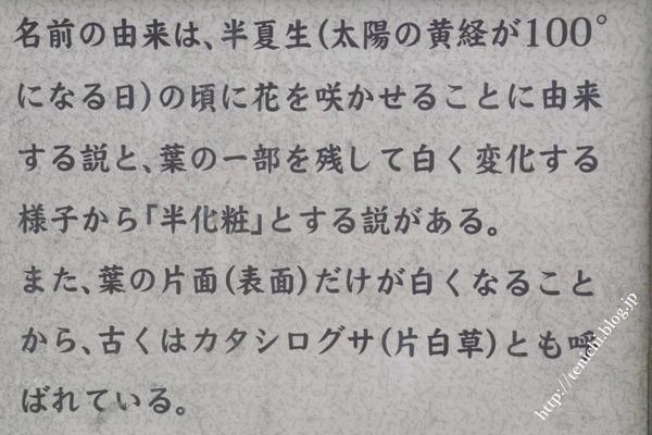 07_06_10(1)