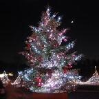 tree_illumination