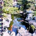 筑波の池1