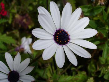 デンバー、花