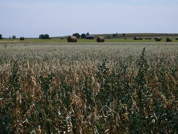 穀倉地帯2