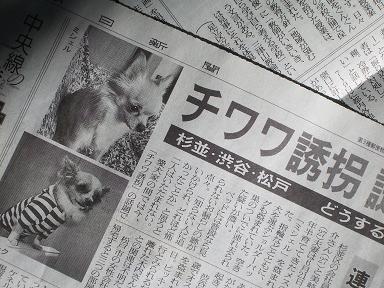 チワワ誘拐記事