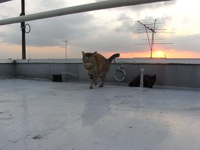 猫たち、夕方屋上にて