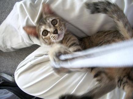 猫とストラップ2
